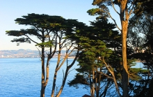 Trees over Crissy field